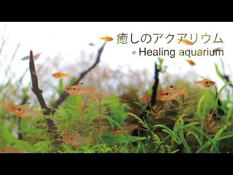 #35.癒し動画 scene3~眠くなるようなゆったりした水槽の世界へ~ Aquarium