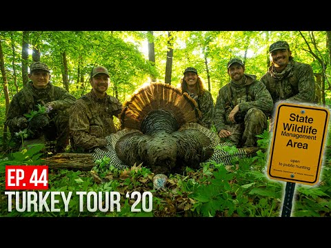 MINNESOTA TURKEY HUNTING! - TWO Public Land Gobblers DOWN!