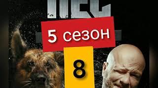 Сериал Пес 5 сезон 8 серия