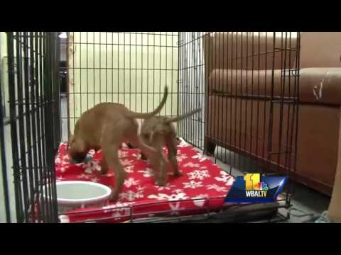 Video: Ohio town comes to rescue of surplus of dogs in Houston