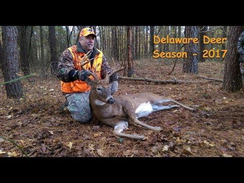 Delaware Deer 2017