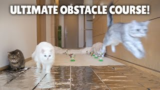 Ultimate Cat Obstacle Challenge! | Kittisaurus