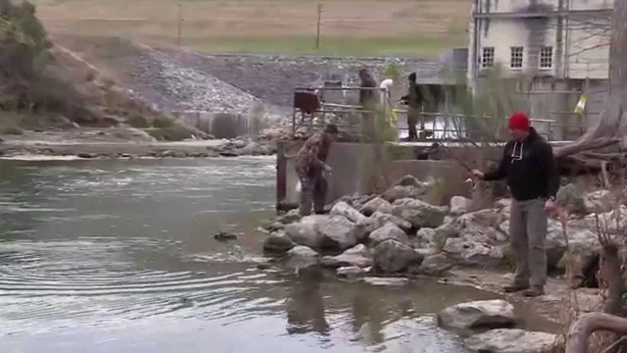 Guadalupe river trout fishing youtube for Guadalupe river trout fishing