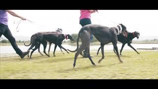 Introducing Greyhound Pets of Ireland