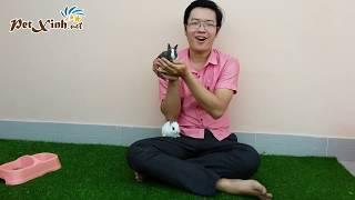 Giới thiệu về các loại Thỏ Kiểng