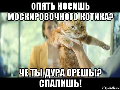 Мои находки - Маскировочный котик