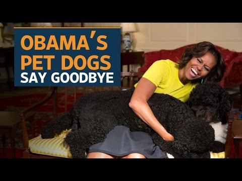 Bo and Sunny, the Obama dogs, say goodbye to the White House