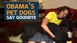 bo and sunny the obama dogs say goodbye to the white house