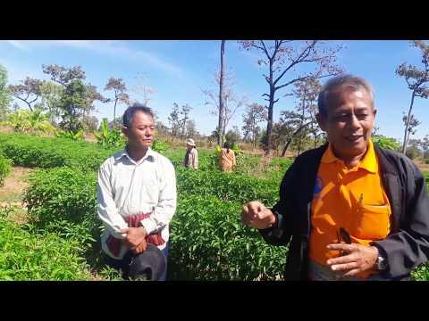 GMP คืออะไร? แนะนำแนวทางการทำเกษตรอินทรีย์สู่ตลาดออนไลน์