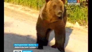 Медведи хозяйничают в пригороде Магадана.