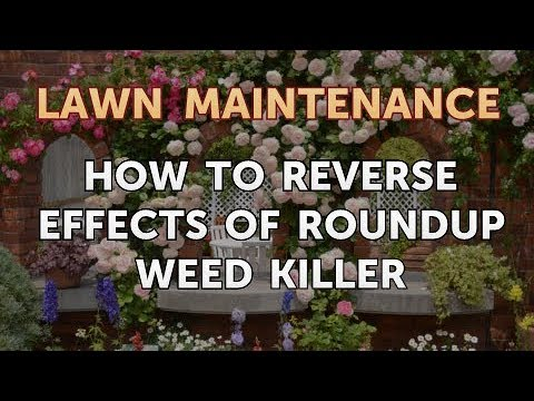 Reverse Effects Of Roundup Weed