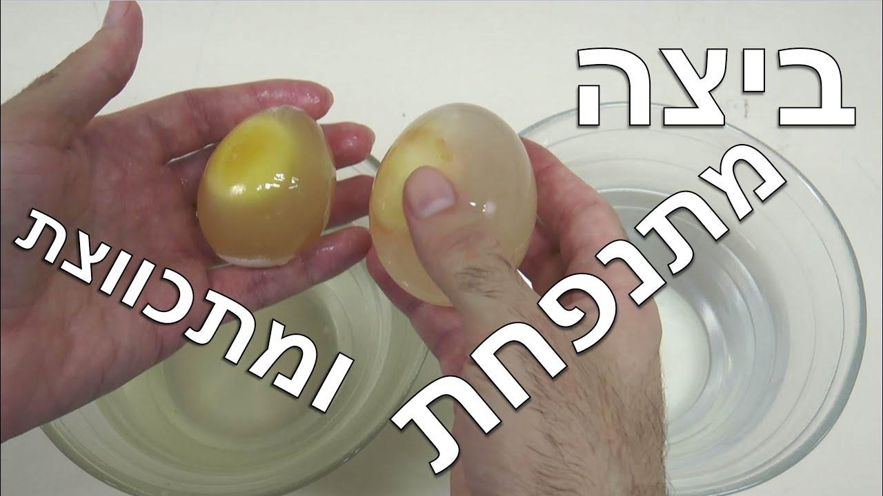 ביצה מתנפחת ומתכווצת