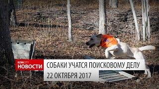Komcity Новости — Поисковая работа с собаками, 22 окт 2017