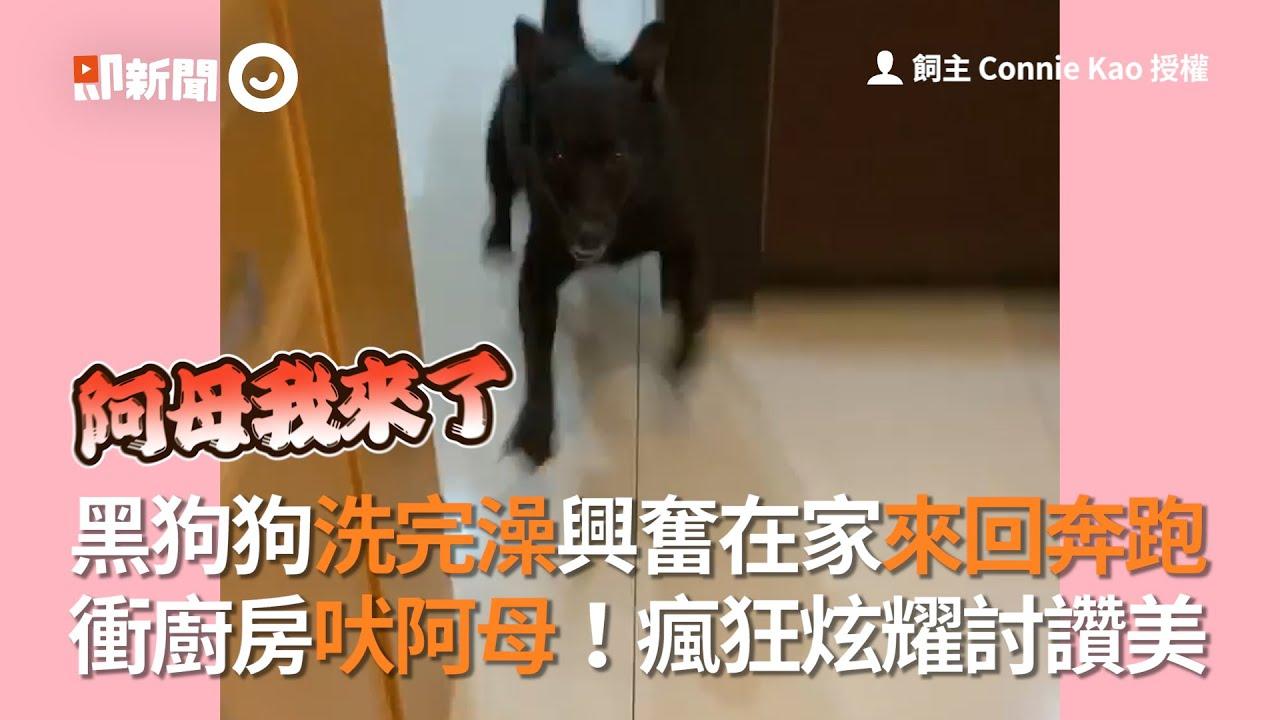 黑狗洗完澡超興奮!來回奔跑向阿母炫耀討讚美|寵物|狗狗