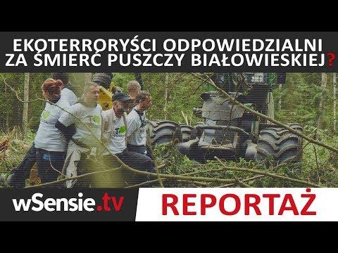 Ekoterroryści odpowiedzialni za śmierć Puszczy Białowieskiej?