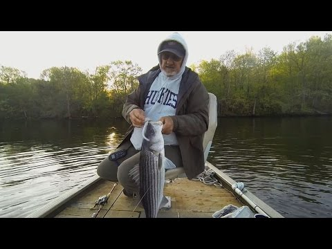Fishing Slug-Gos For Stripers On The Housatonic