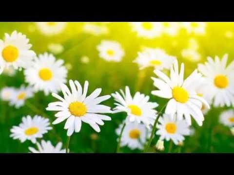 Yanni - Inspirato - Il Primo Tocco - Full Track