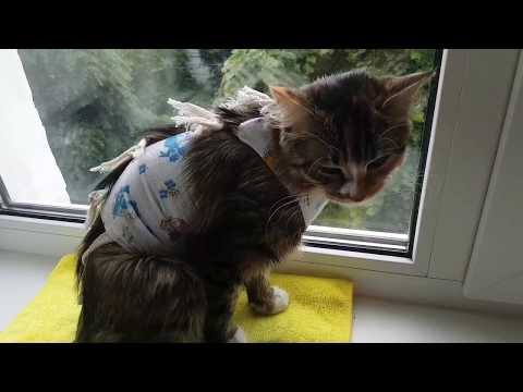 Как ведет себя кошка после стерилизации отзывы
