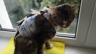 Стерилизация кошки. День 1
