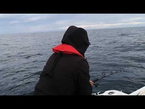 Fishing Hawkes Bay NZ 2018