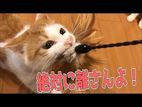 【大興奮】絶対に猫が遊ぶ猫じゃらしが凄すぎたwww