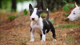 Litter Sj36 - July 06, 2014 (photos)