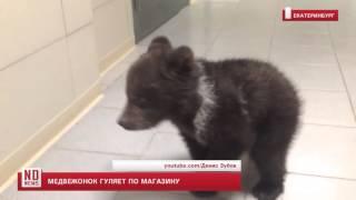 Медвежонок гуляет по магазину