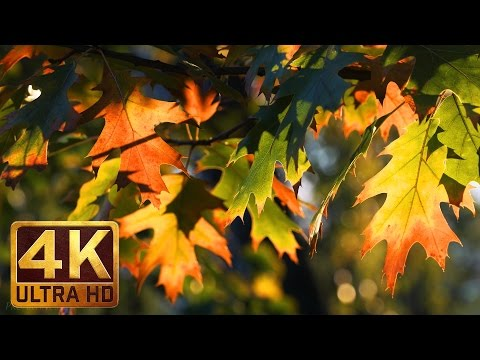 AUTUMN PALETTE - 4K Nature Relaxation Video in 4K with Relaxing Piano Music - 2.5 HOURS