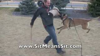 Sit Means Sit Dog Training - Protection Dogs Boston, Massachusetts