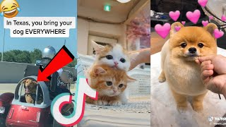 2020 july funny cute tik tok animals compilation(Pt.4)