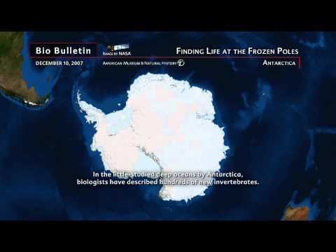 """Science Bulletins: Finding Life at the Frozen Poles"""" Antarctica"""