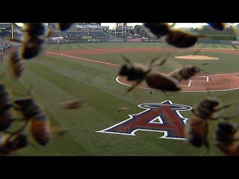 Craziest Animal Invasions in Sports