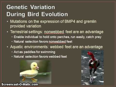 Evo-Devo: Evolutionary Developmental Biology Part 1
