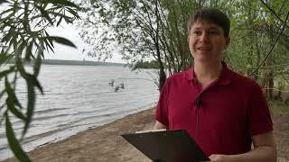Гороскоп 9 - 17 июня - новый виток жизни, полнолуние 17 июня / астропрогноз Павел Чудинов