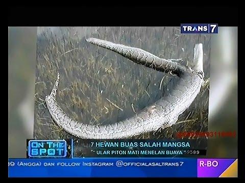On The Spot - 7 Hewan Buas Salah Mangsa