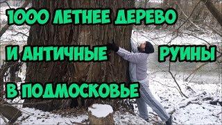 1000 летнее дерево и античные руины в Подмосковье.