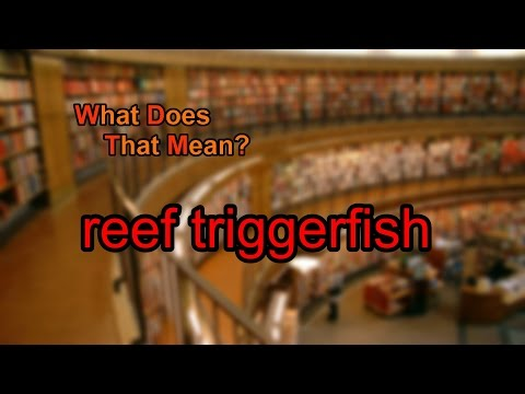 What does reef triggerfish mean?