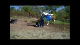 APHA Shesa Hot Lil OooLaLa - Baby Horse, Bean Bags and Bouncing Balls
