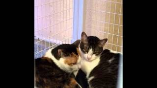 Precious and Bowser Pets of the Week All New WNEW FM 99 1