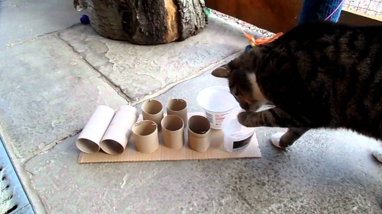 Cat using feeder puzzle.MP4 - YouTube