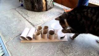 Cat using feeder puzzle.MP4
