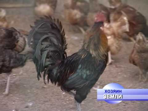 знакомства дмитровский район