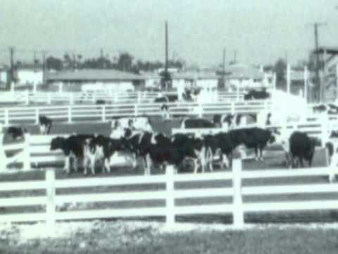 Farming in Torrance, Early History & Demise - Torrance Centennial