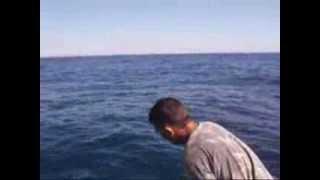 kıbrıs balık avı 29 kğ amberjack (mıneri)