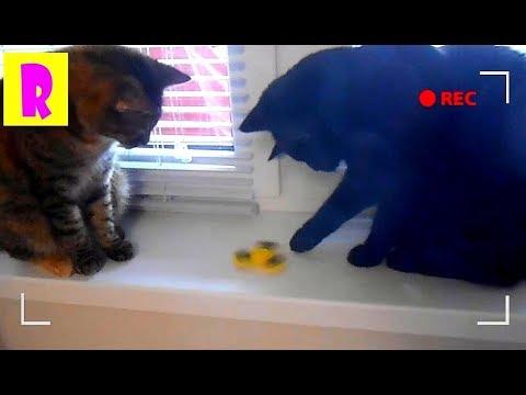 Приколы с Котами Спиннер и Кошки Том и Джерри Кошки крутят спиннер Spinner Tom and Jerry HappyRoma