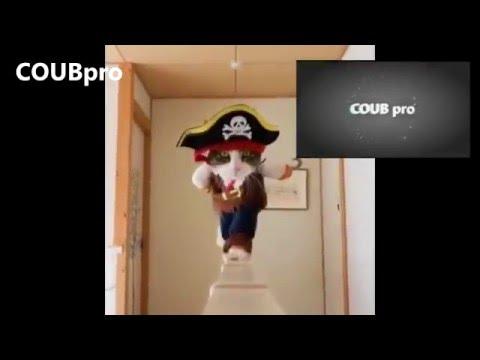 COUB pro Пираты карибского моря \ Самое смешное [ПРИКОЛЫ]  \ Best coub [jokes]