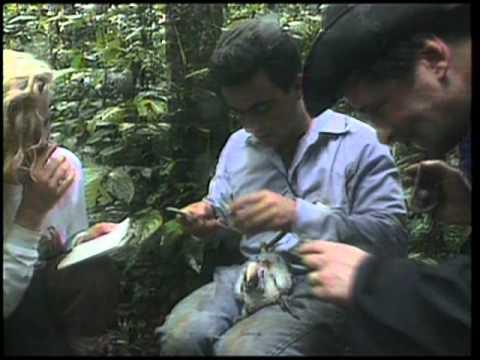 Raw Footage Robert Drew episode trailer