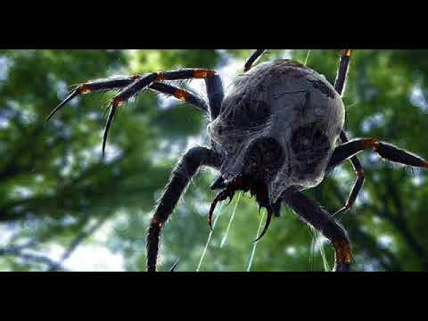 Giant Spider Porn Tape Sabinche Tomatovic Tape Explained