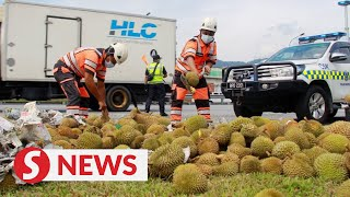 Overturned lorry with durian causes traffic crawl