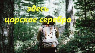 Путешествие в тайгу! Поиск монет с металлоискателем в лесу, коп монет. Всё из за копа!